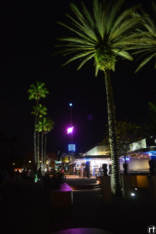 disney world palm trees