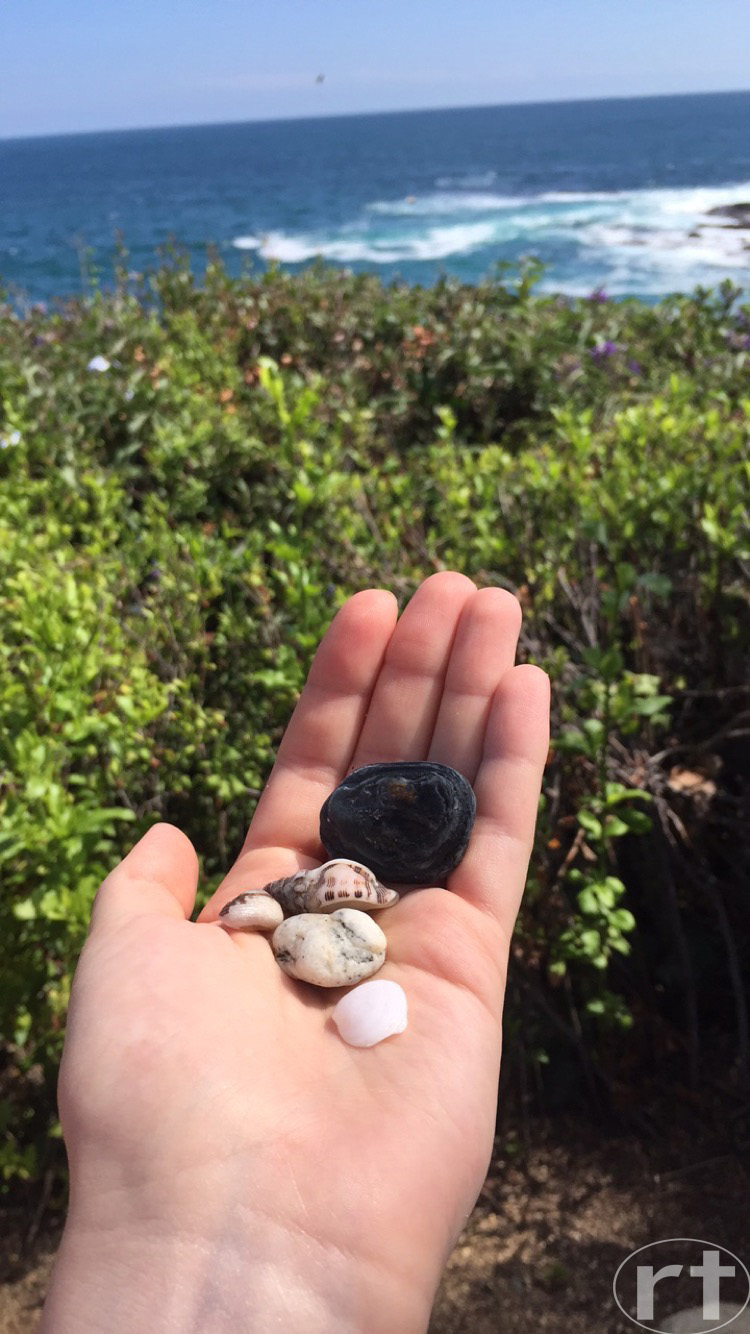 Shells Rocks Laguna Beach Los Angeles California