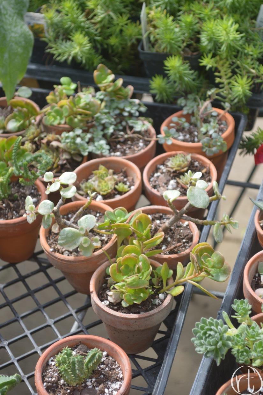 Helmi's Gardens Cacti