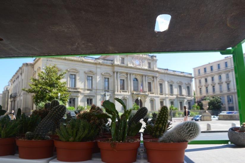 Cacti Montpellier France Travel