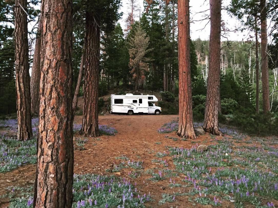 RV West Coast Road Trip Motorhome Woods Forest Travel