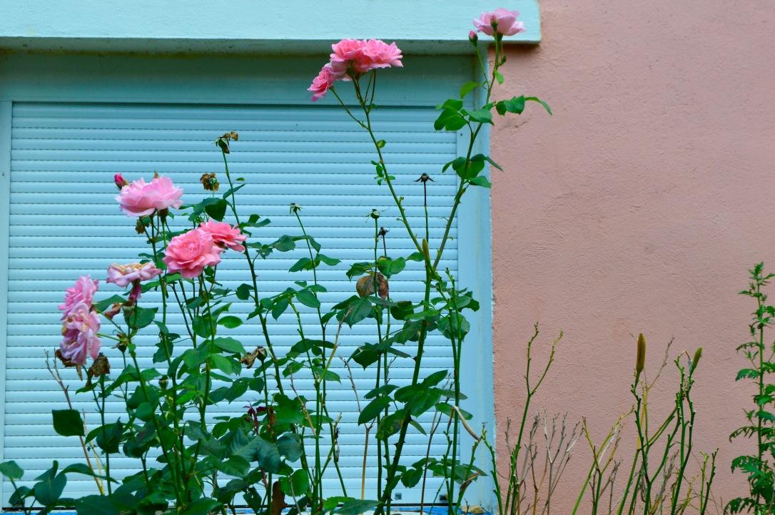 Flowers Aveyron Occitanie France