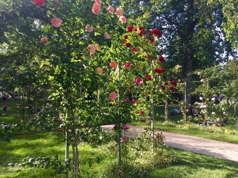 Jardin des Plantes Toulouse France Roses Garden