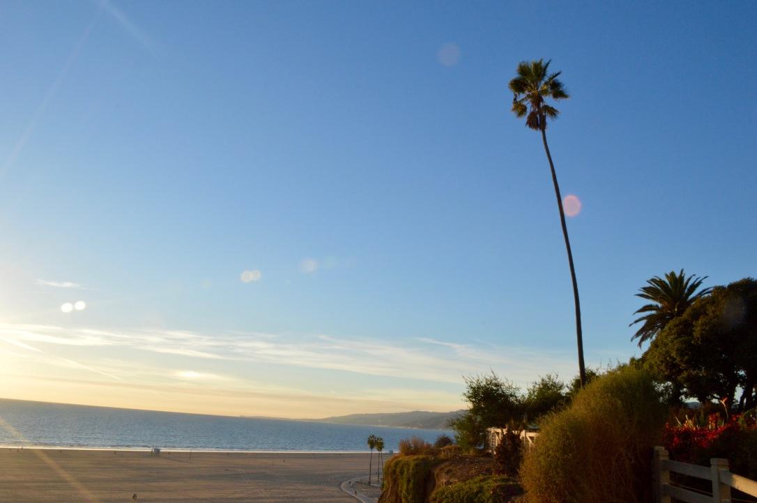 Palm Tree Ocean Santa Monica California