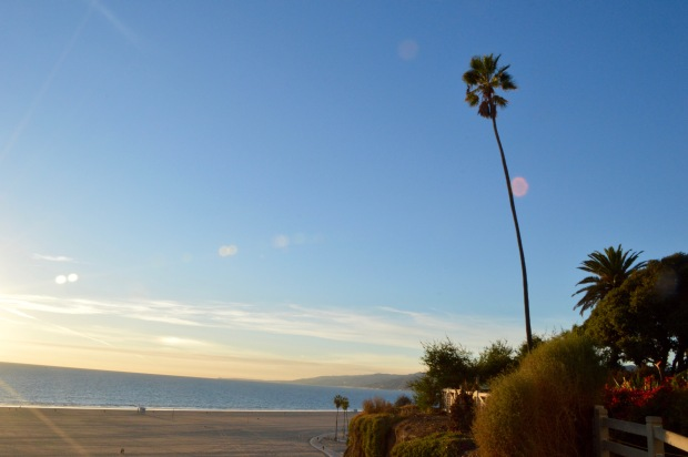 Palm Tree Ocean Santa Monica California