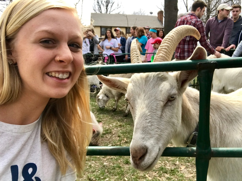 Petting Zoo April Roundup Round Trip