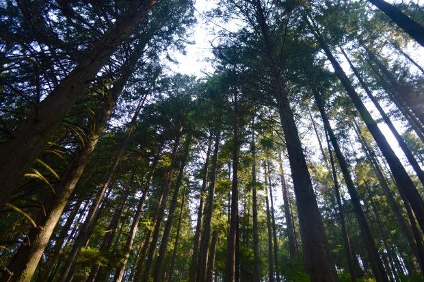 Lynn Canyon Park Trees Canada